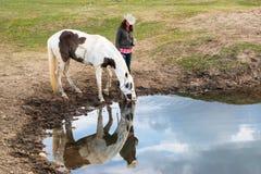 给她的马喝水的女牛仔妇女在池塘 免版税库存照片
