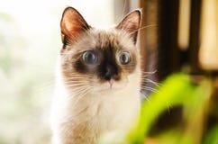 好奇吃惊的小猫 图库摄影