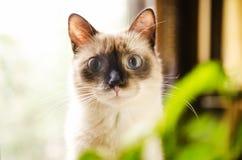 好奇吃惊的小猫 免版税图库摄影
