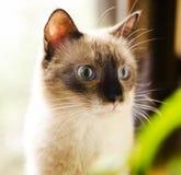 好奇吃惊的小猫 免版税库存照片