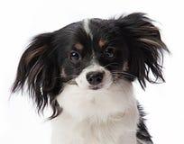 小狗画象 库存照片