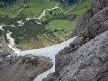 好奇地检查方式的害羞的山高地山羊 库存图片