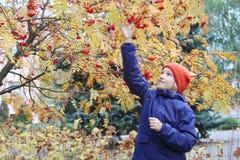 好奇孩子女孩从分支收集花楸浆果 孩子在有耳朵的一个滑稽的被编织的温暖的帽子打扮,看起来狐狸 库存图片