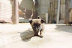 好奇小狗 免版税库存照片