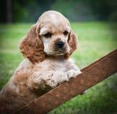 好奇小狗 图库摄影