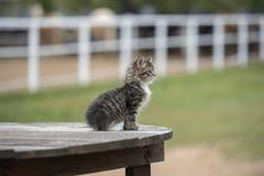 好奇小猫一点 免版税库存图片