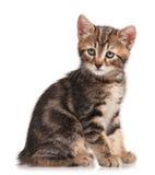 好奇小猫一点 免版税图库摄影