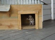 好奇小猫在木头和金属猫议院里 免版税库存图片