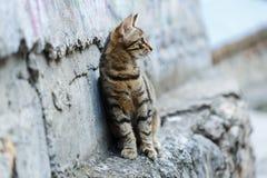 好奇小猫坐墙壁 库存照片