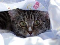 好奇小猫查找年轻人 免版税图库摄影