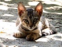 好奇小猫 库存照片