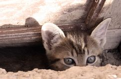 好奇小猫 免版税库存照片