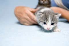 好奇小猫 库存图片