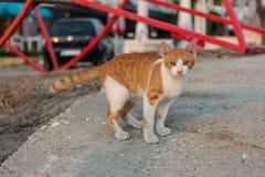 好奇无家可归的猫 免版税库存照片