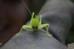 好奇昆虫 图库摄影
