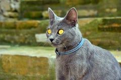 好奇灰色小猫 图库摄影