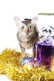好奇猫作为圣诞节礼品 免版税库存图片