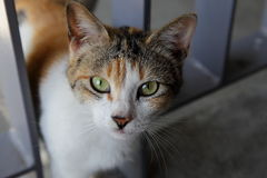 好奇猫注视照相机黑暗的角落 免版税库存图片