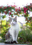 好奇猫画象 图库摄影