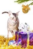 好奇猫 库存图片