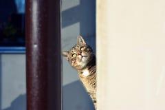好奇猫 库存照片