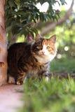 好奇猫 免版税图库摄影