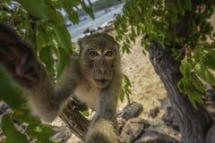 好奇猴子拿着看直接地入透镜螃蟹的照相机 库存照片