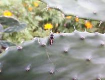 好奇的昆虫 免版税库存图片