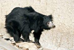 好奇的熊 库存照片