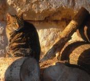 好奇的猫 库存照片