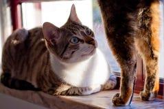 好奇的猫 免版税库存照片