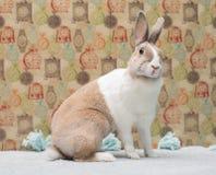 好奇矮小的滑稽的兔宝宝看快乐地掀动头 免版税库存照片