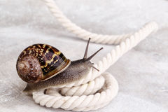 好奇蜗牛 库存图片