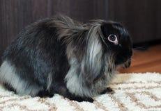 好奇逗人喜爱的兔子 免版税库存图片