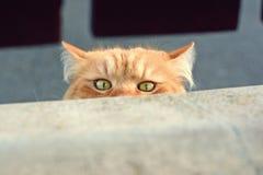 好奇逗人喜爱的猫 免版税库存照片