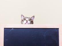 好奇,滑稽的小猫显示舌头 免版税库存图片