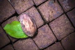 好抗氧剂-有机未加工的恶豆种子和恶糖果点心立方体 免版税库存图片