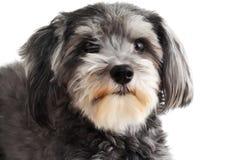 好拙劣的狗 免版税图库摄影