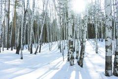 好日子在冬天桦树森林里 免版税库存图片
