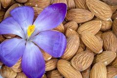 碗杏仁和一朵紫色花 免版税库存图片