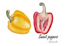 好淫明亮的五颜六色的查出的胡椒以子弹密击空白甜的twosomes 在白色背景的手拉的水彩绘画 也corel凹道例证向量 库存图片