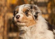 好的一只小狗 免版税图库摄影