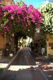 好的九重葛在雅典在希腊 免版税库存照片