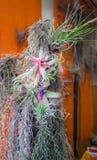 好的兰花植物构成 免版税图库摄影