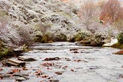 好的多雪的森林 免版税库存照片