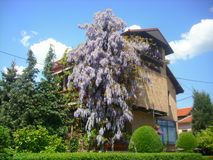 好的房子在春天-市弗拉涅 免版税图库摄影
