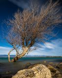 好的树在湖 免版税库存图片