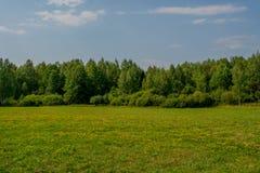 好的桦树森林和蓝色地平线视图 库存图片