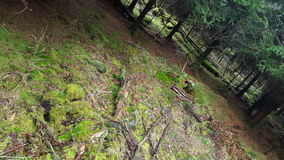 好的森林 免版税库存照片