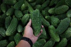 更好的瓜(Peria Katak)在新鲜市场或湿市场上 库存照片